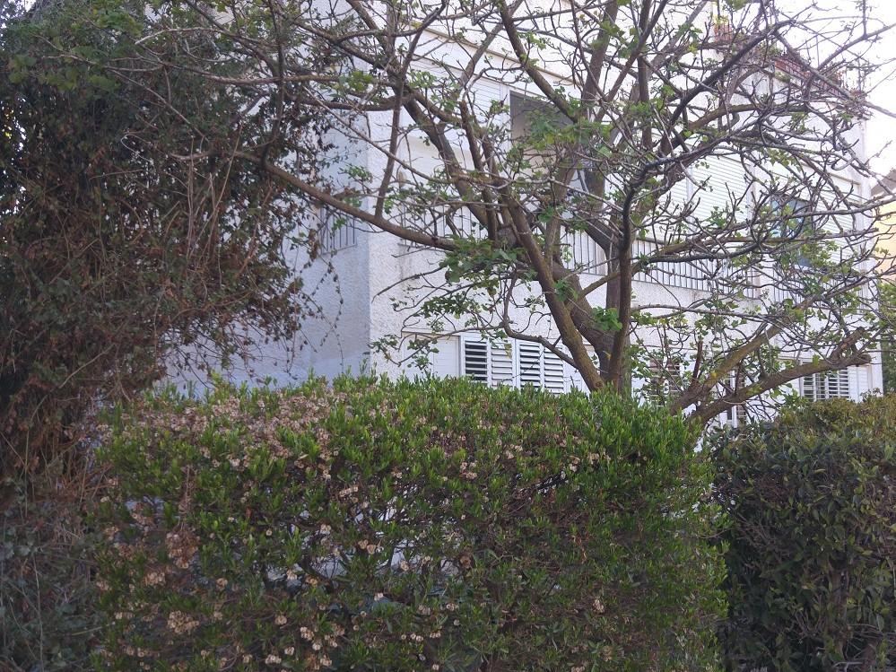 למכירה בבלעדיות, תיווך במרכז הכרמל, חיפה – דירת 6 חדרים רחבת ידיים