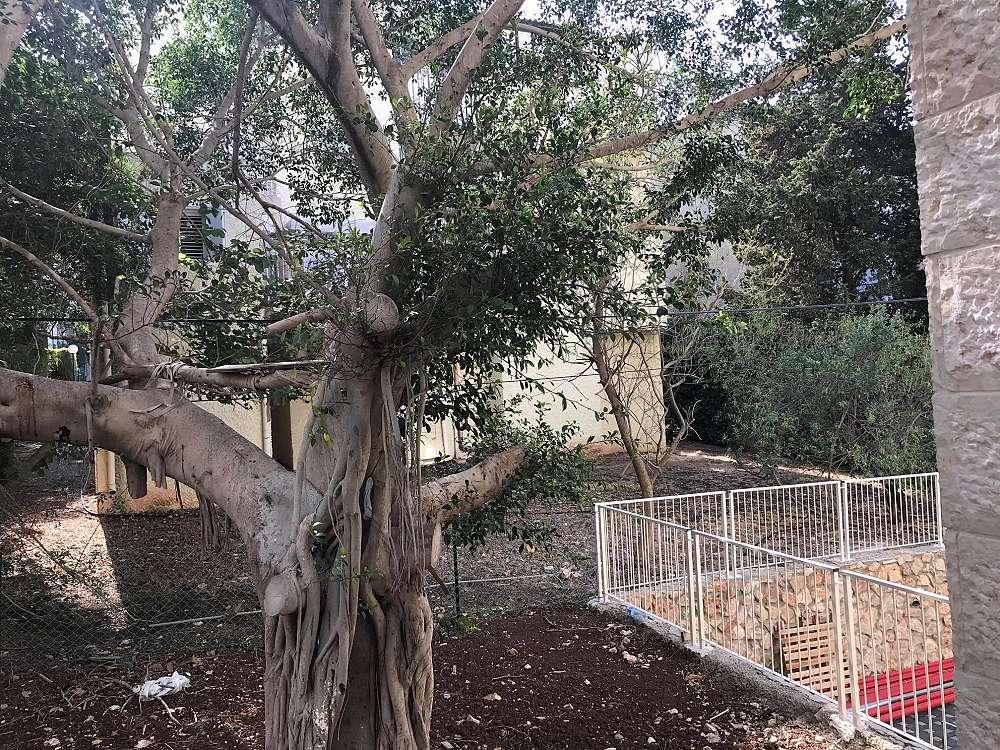 למכירה בבלעדיות, דירה בלב הפועם של שכונת כרמליה, חיפה, ברח' אלכסנדר ינאי.